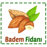 Badem Fidanı